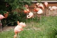 29-Flamingos