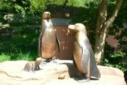 29-Pinguingelaende
