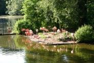 38-Flamingos