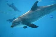 40-Delphin