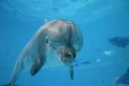 41-Delfin